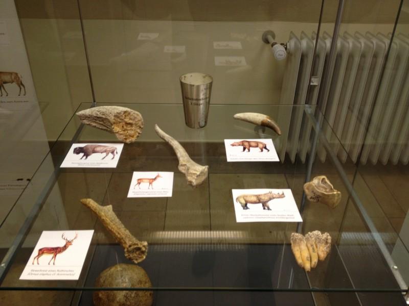 IAusstellung im Museum im Deutschhof